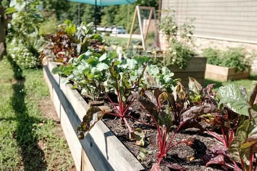 plantation de potager