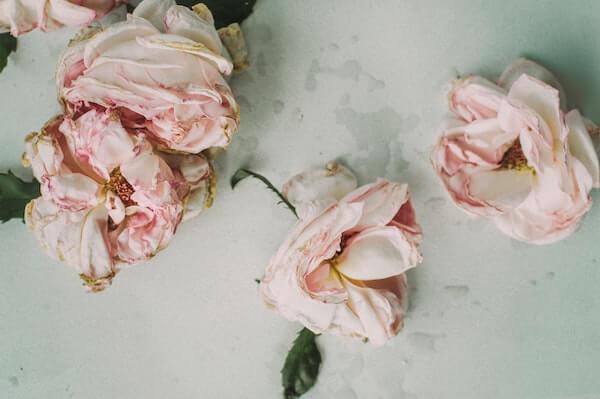 fleur de rosier muscat